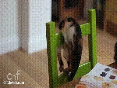 Enlace a No sé qué pretendía hacer este gatito