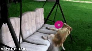 Enlace a La batalla final entre este perro y el balancín