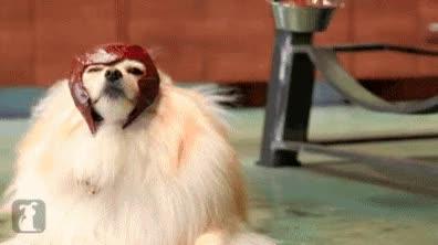 Enlace a Dogneto, el perro mutante