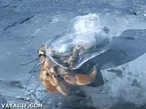 Enlace a El tuning ha llegado al mundo de los cangrejos ermitaños