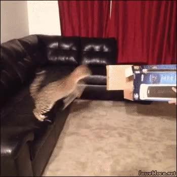 Enlace a Al final nunca eres tan ninja como te crees, ni siquiera los gatos