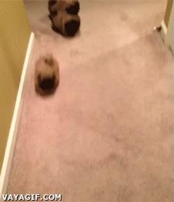 Enlace a ¡Se escapan las patatas! No espera, ¿son perros?
