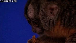 Enlace a La tele ha llegado al nivel donde un mono puede ser el mejor colaborador de un programa de humor
