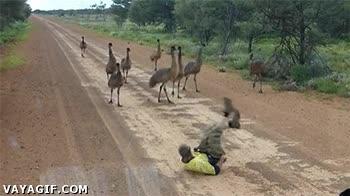 Enlace a ¡Eh chicos, mirad qué animal tan extrañ...! ¡Es un humano, corred!