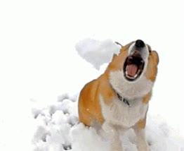 Enlace a ¡A mí no me tires nieve que me la como, que estoy muy loco!