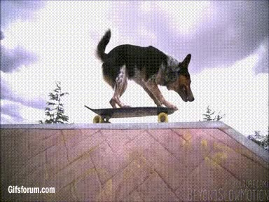 Enlace a He was a skater dog