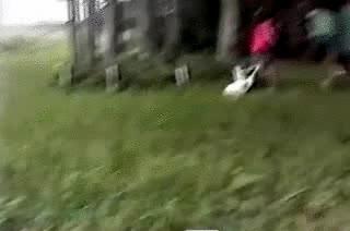 Enlace a Te dije que un pato no es una buena mascota