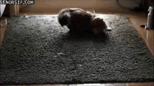 Enlace a ¿Quieres que el trolleo con el láser a tu gato sea todavía peor? Hazlo sobre una alfombra