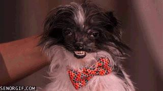 Enlace a Hay perros guapos, perros feos y bueno...