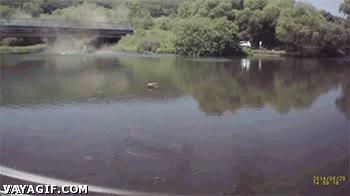 Enlace a Un coche cae a un profundo lago tras un accidente en un puente. Bueno, igual tan profundo tampoco
