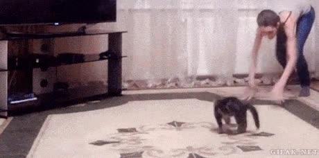 Enlace a La falta de coordinación de los gatitos pequeños hace que salten de una manera muy divertida