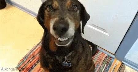 Enlace a Cuando te piden que sonrías en una foto y no estás de humor