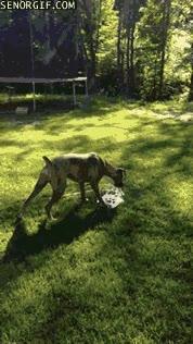 Enlace a Nada entretiene más a este perro que jugar con el agua