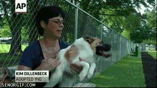 Enlace a El perricerdo, un animal con cabeza de perro y cuerpo de cerdo