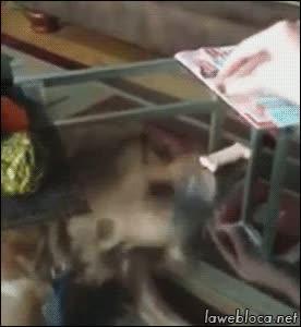 Enlace a Trolleando al perro con una mesa de cristal