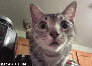 Enlace a La cara de curiosidad de los gatos es insuperable