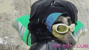Enlace a El primer perro saltador base del mundo