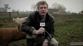 Enlace a Ha llegado el momento de que los cerdos tengan su venganza