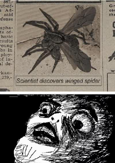 Enlace a Han descubierto arañas con alas, estamos perdidos...