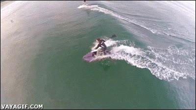Enlace a Un surfista pasando por encima de un tiburón, suerte que no ha caído al agua