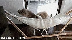 Enlace a La practica hace al maestro, este es Timo, el gato de la hamaca
