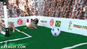 Enlace a Morirás de ternura cuando veas a estos perritos y un gato jugar a fútbol