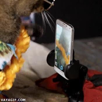 Enlace a Cuando hasta un gato tiene más estilo que tú...