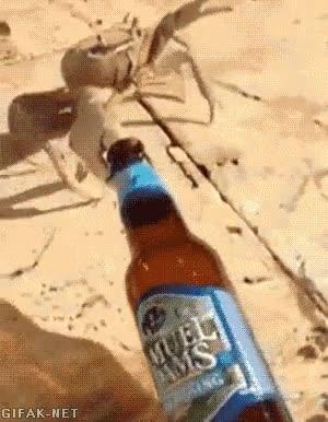 Enlace a Disculpa, sólo pasaba por aquí, vi la botella y...