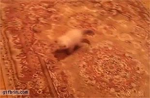 Enlace a ¡Se mueve el suelo!