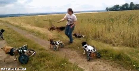 Enlace a Los perros de Ben-Hur