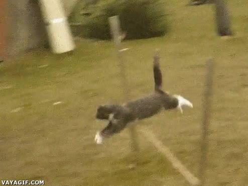 Enlace a ¿Quién decía que un gato no podía recorrer un circuito?