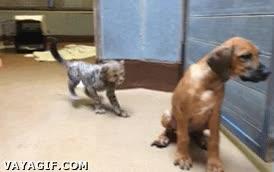 Enlace a Trabajo en equipo felino para trolear al perro