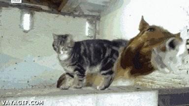 Enlace a ¿El mejor amigo del caballo? El gato, de toda la vida