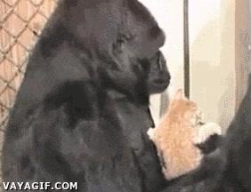 Enlace a La relación con los gatitos es tan ancestral como esto