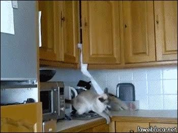 Enlace a Gatencio, se ha acabado el papel higiénico, ¿me puedes traer papel de cocina?