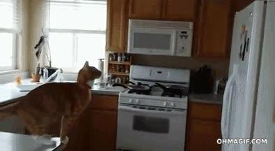 Enlace a Algún día los gatos aprenderán lo deslizante puede llegar a ser la cocina