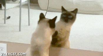 Enlace a Mierda, me han clonado...