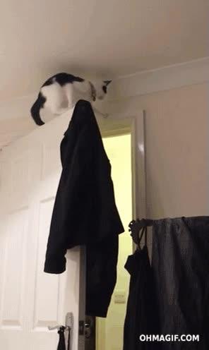 Enlace a Creo que el gato no ha tenido en cuenta que la puerta se podía mover