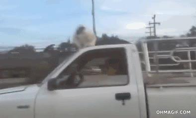 Enlace a Este perro es tan temerario que los viajes en coche no los hace como deberían hacerse
