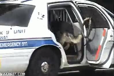 Enlace a El mejor perro policía, ¡qué listos son!