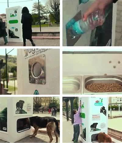 Enlace a Máquina de ayuda para perros pobres