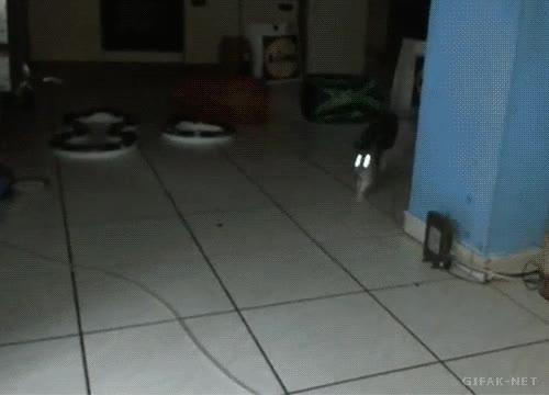 Enlace a Gato al ataque