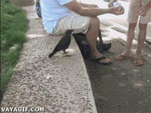 Enlace a Un cuervo con sed pidiendo agua