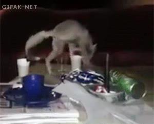 Enlace a Un zorro del desierto dejando un regalito a un soldado