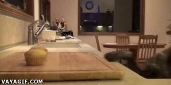 Enlace a Dejar enfriar las magdalenas en la cocina teniendo un perro tan listo no es una buena idea