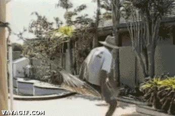 Enlace a Monta una hamaca en el jardín dijeron, así podrás descansar dijeron...