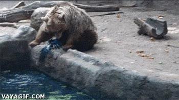 Enlace a Un oso rescata a un cuervo atrapado en el agua