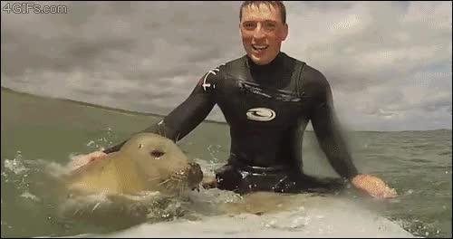 Enlace a Lo típico, haciendo surf con mi colega la foca