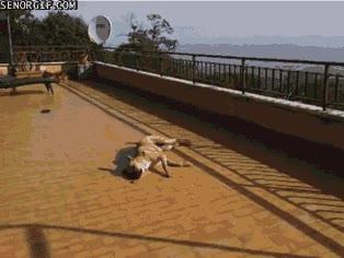 Enlace a Y éste es el ritual que siempre hace este perro antes de comerse una uva