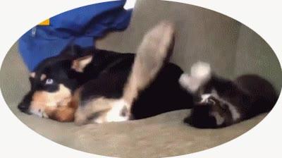 Enlace a ¿Qué gatito, empezamos en entrenamiento?